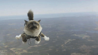 Skydiving cat