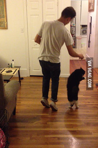 """Luke somehow taught our cat how to dance last night"""