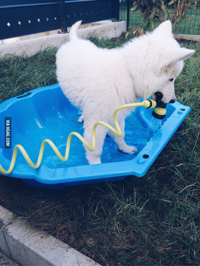 If You 39 Re Having A Bad Day Just Look At This Puppy Filling His Swimming Pool 9gag