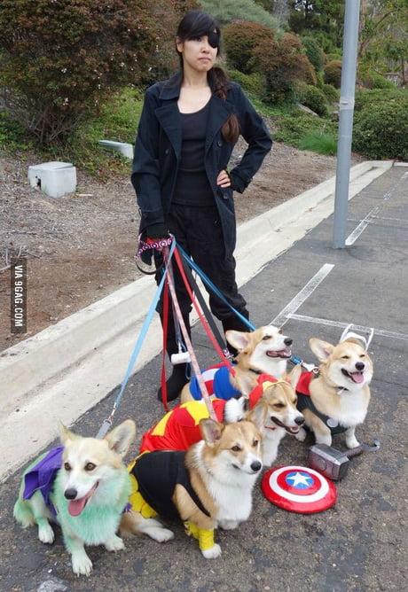 Best Cosplay, Corgi Avengers