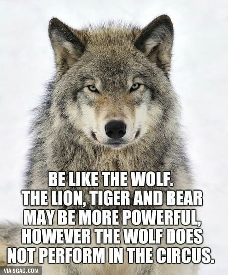 Be like the wolf.