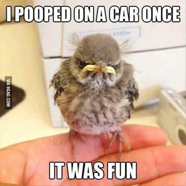 Grumpy bird is grumpy