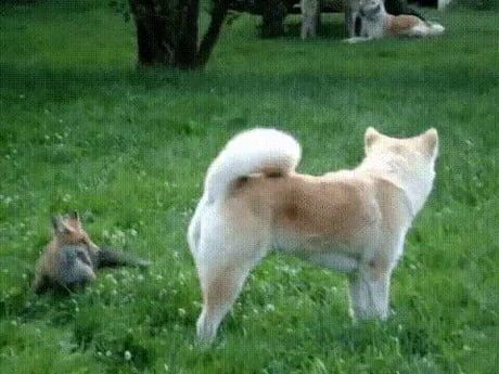 Quick Brown Fox Jumps Over the Lazy Dog