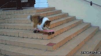 Best Skateboard Tricks Best Skateboard Trick Ever