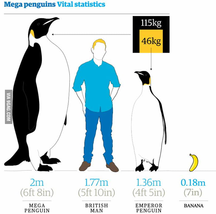 an analysis of the penguin animal species The penguin is found pretty much only in the southern hemisphere, only a handful of penguins though are in the far south the emperor penguin inhabits the icy lands.