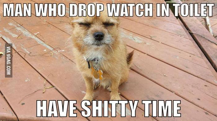I present, proverb dog.