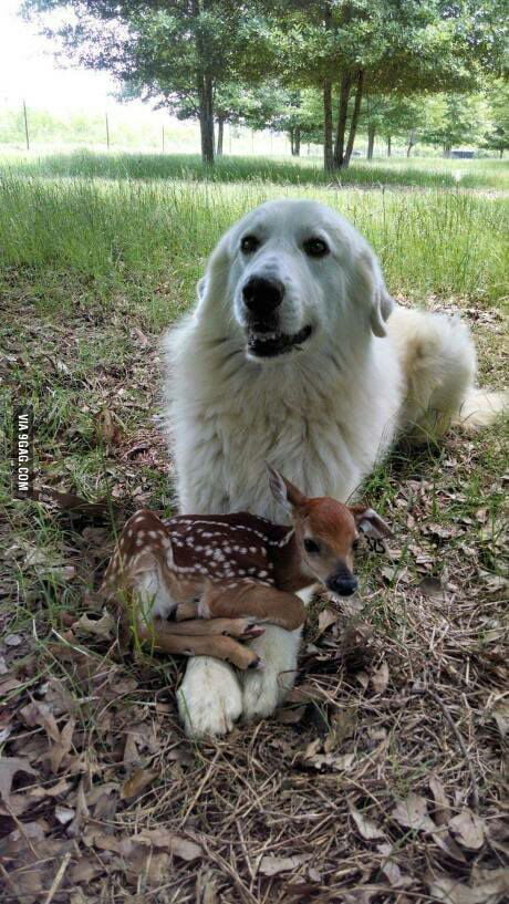 Holding a very deer friend