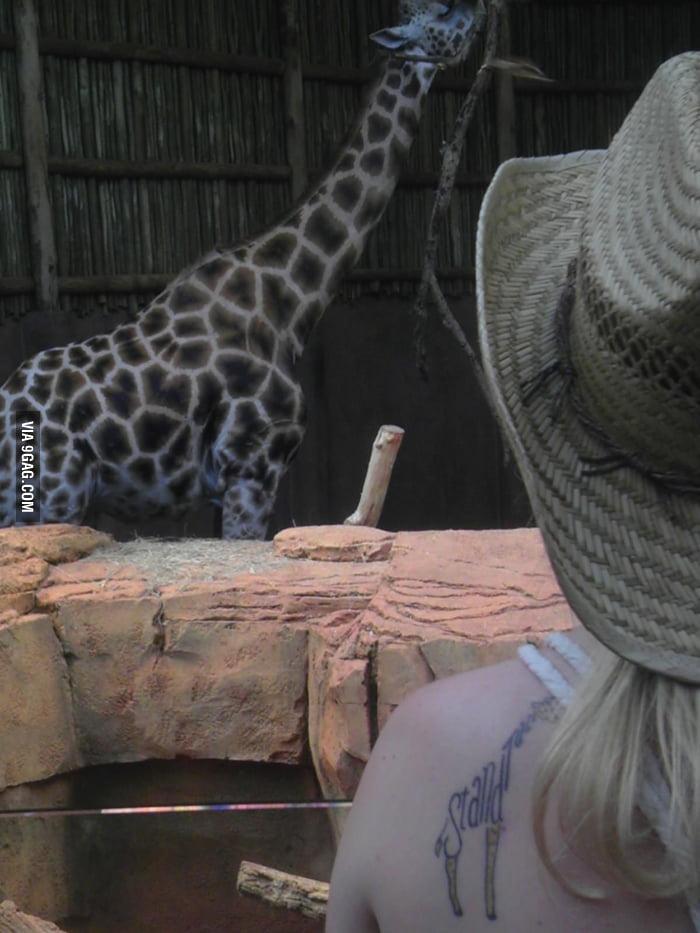 I have a giraffe