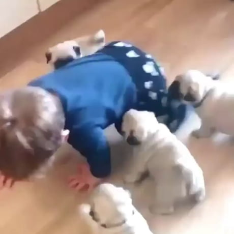 Toddler brutally attacked by 4 dogs