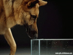 Today I learned how dogs really drink water