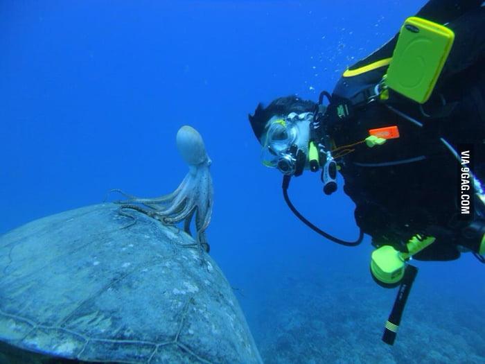 Octopus Riding Sea Tur...