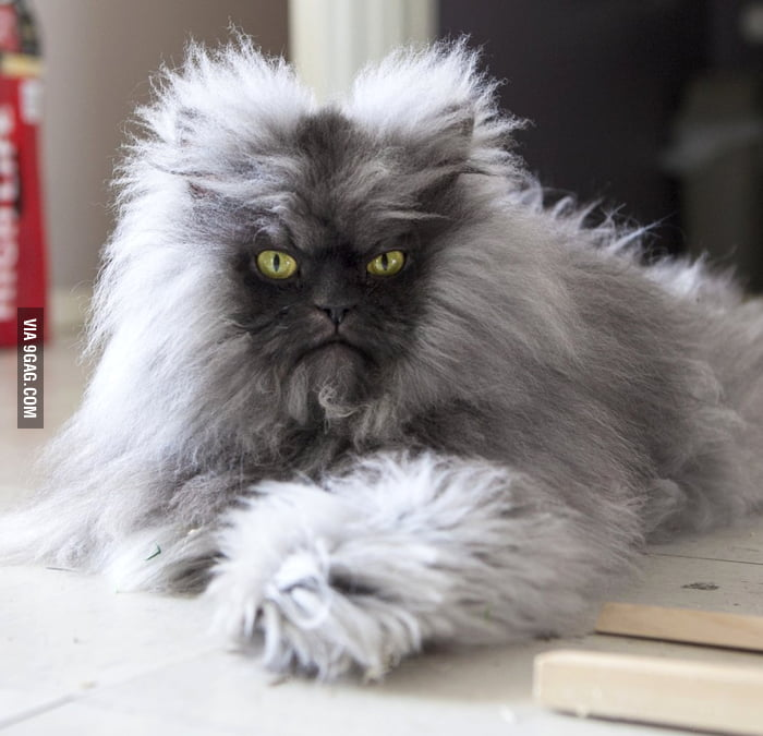 the weirdest guinness world records featuring money - Biggest Cat In The World Guinness 2013