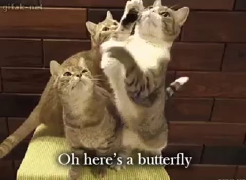 Funny animated cats