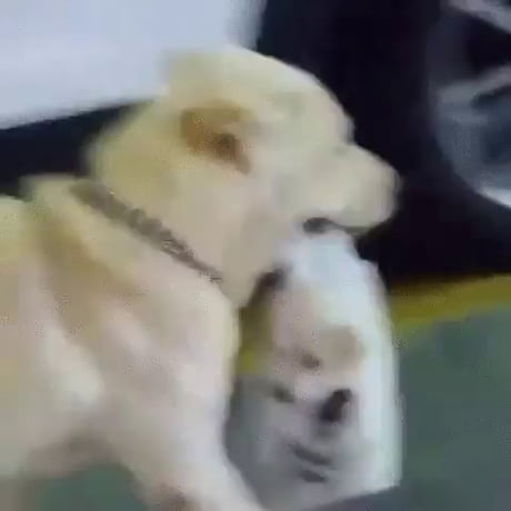 Mom taking her pup for a walk.