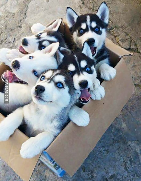 Since this is 9gag have some puppies. Would get more upvotes with tits, cats, relationship problems posts or some other unfunny shit.