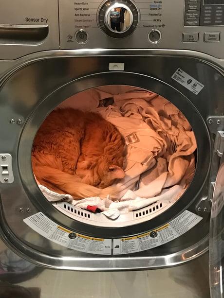 Mr. Cat found somewhere warm to nap