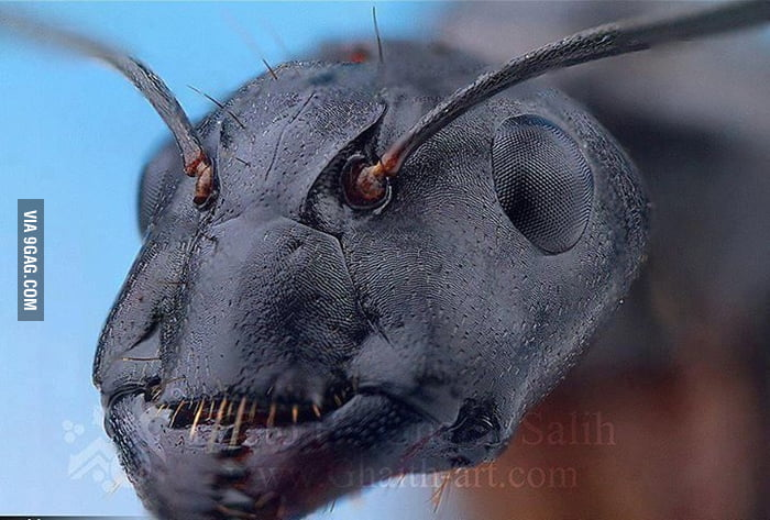 Close Up Head Of An Ant 9gag