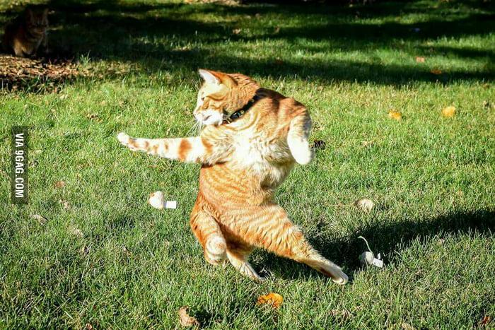 Funny Kung Fu Cat Pics