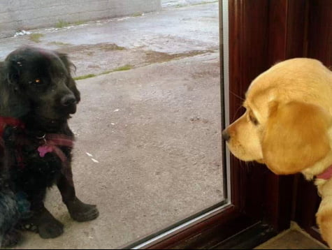 These two friends were put on time out. They both got sad and stared at each other through the glass.