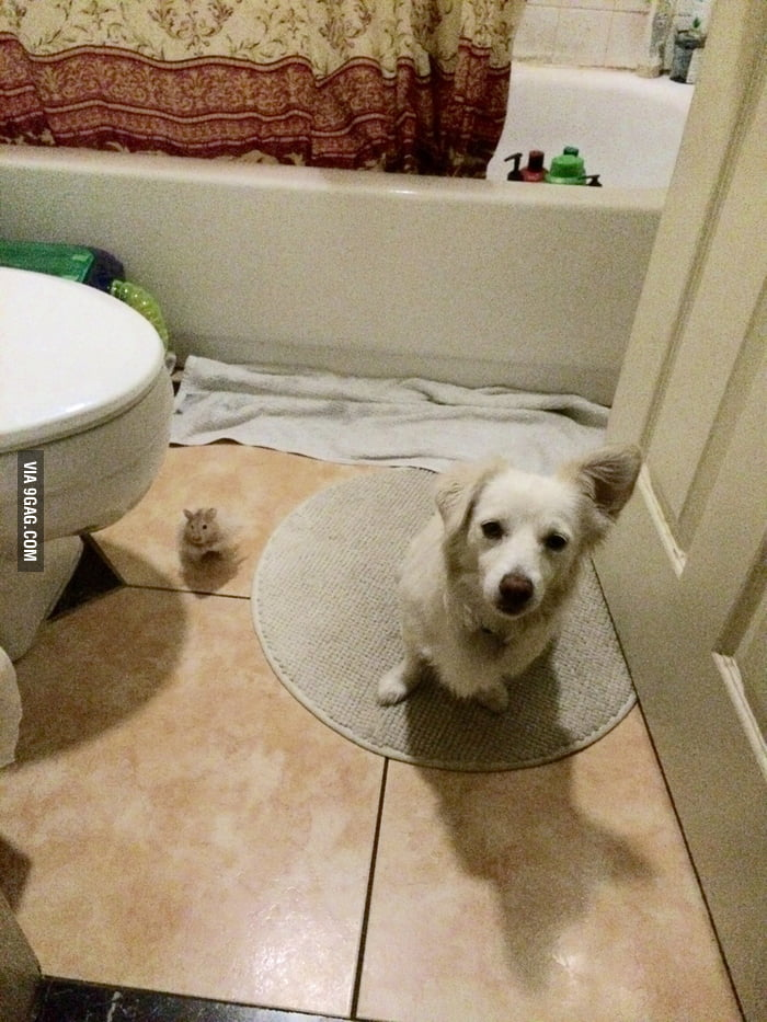 So found her dog and hamster playing in the bathroom 9gag for Bathroom 9gag