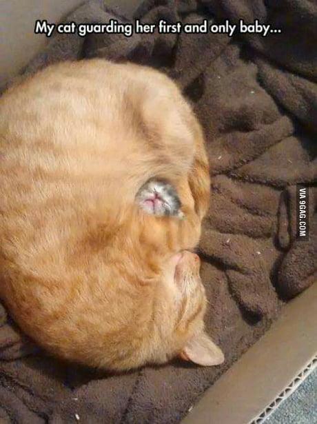 Sleep of cuteness