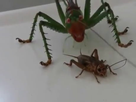Bugs are f**king scary