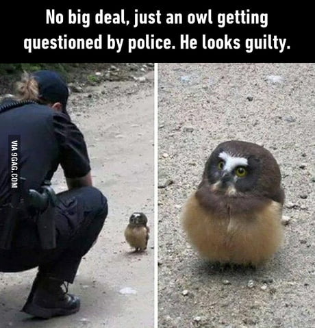 Am I being detained, hooman?