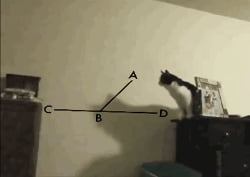 Cate calculating the perfect jump
