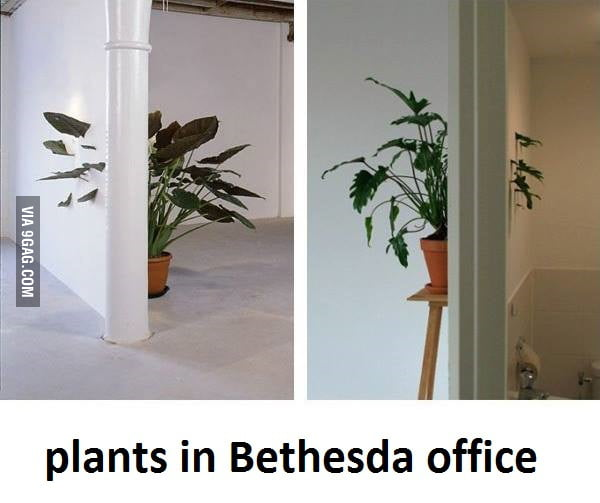 plants in bethesda 39 s office 9gag