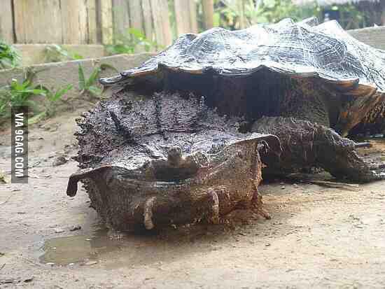 A very strange turtle ...