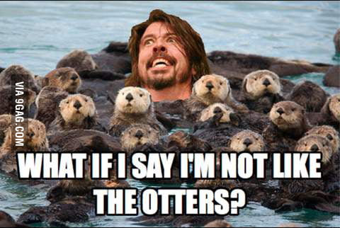 Look at me! I am not like the otters!