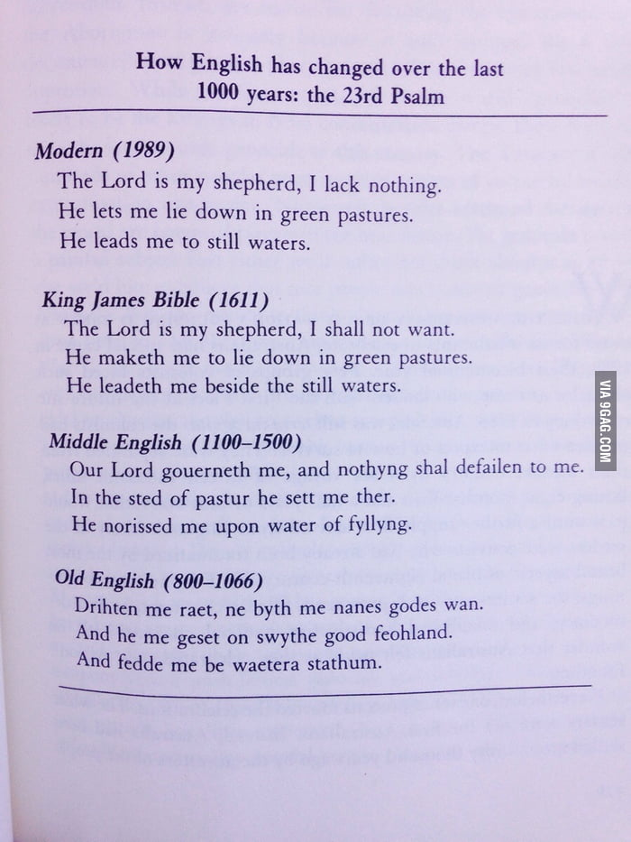 essay on the evolution of the english language