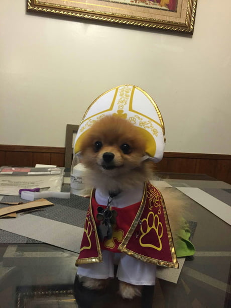 Just a doggo with a pope costume. keep scrolling