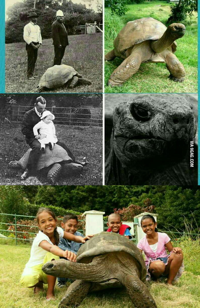 Johnathan the turtle, ...
