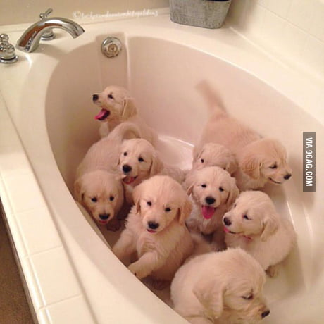The Golden Tub