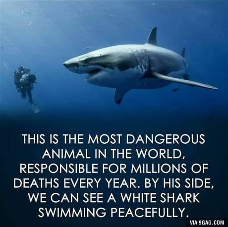 Responsible for the extinction of so many species!