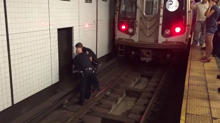 Kitty jumps onto NYC subway tracks, causes over 80 trains to be delayed