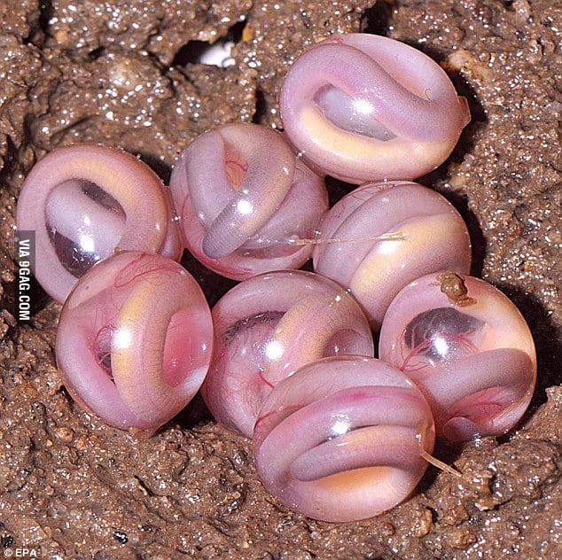 Baby snakes Inside eggs