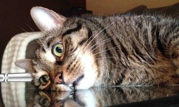 Existential Crisis Cat 9gag