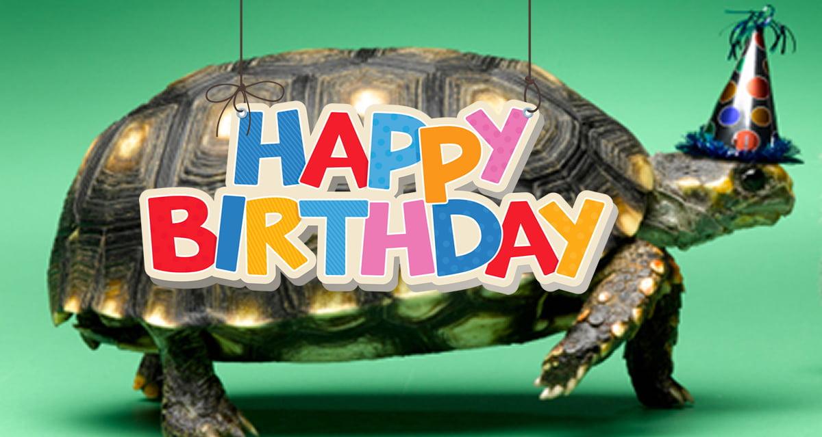 Celebrating A Turtle's...