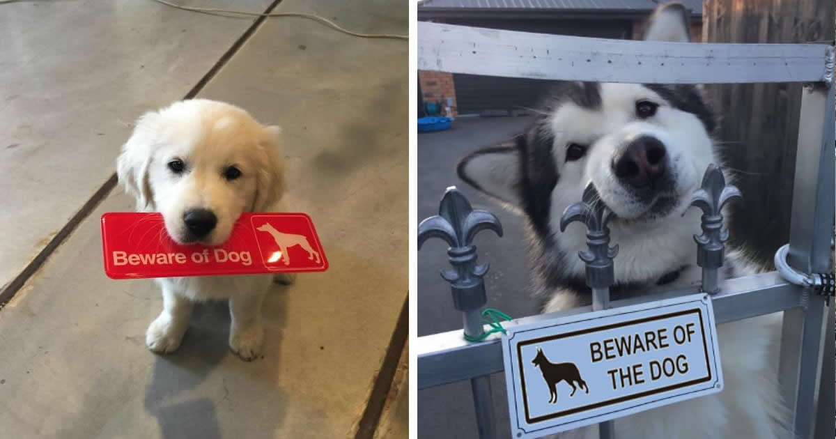 17 Dangerous Dogs Behind Beware Of Dog Signs 9gag