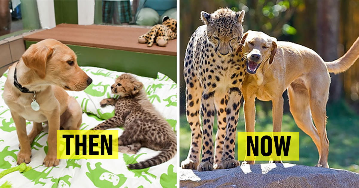 22 Before & After Pics Of Animals Growing Up Together