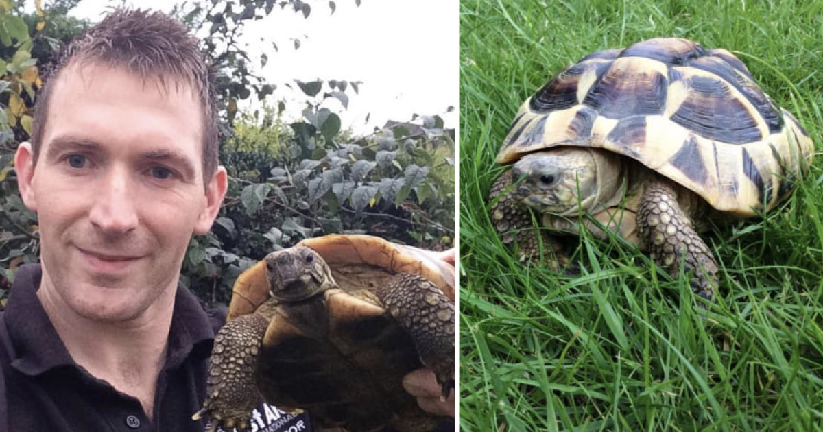 Meet Timmy, It Might Be The Angriest Tortoise In The World