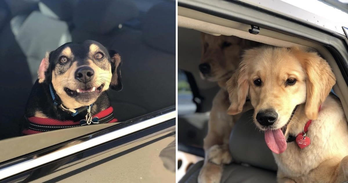 Bagel Shop Employee Captures The Facial Expressions Of Dogs That Come To Her Drive