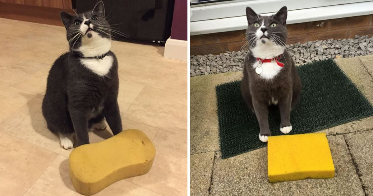Cat Keeps Bringing Home Sponges And This Leaves Its Humans Puzzled