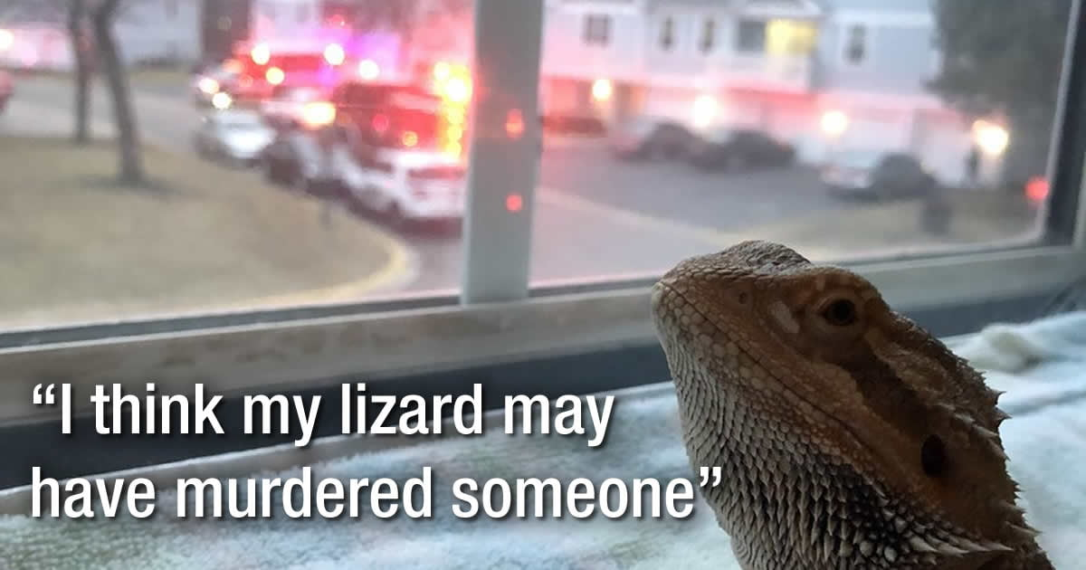 This Woman Suspects Her Lizard Is Capable Of Murder And People Are Convinced