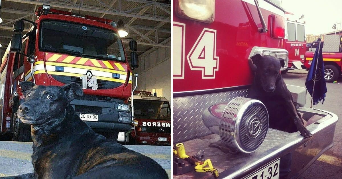 Firefighters Give The Sweetest Goodbye To Their Beloved Station Dog