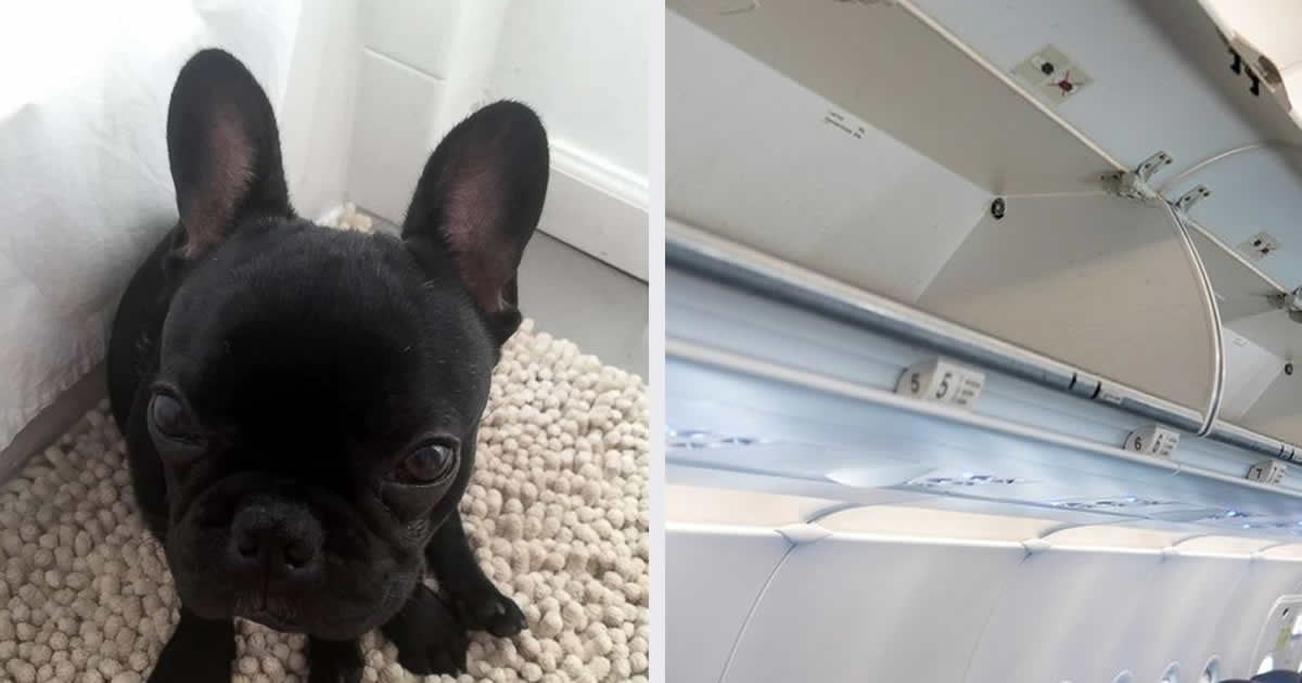 Pup Dies After Flight Attendant Forces Passenger To Put It In Overhead Bin