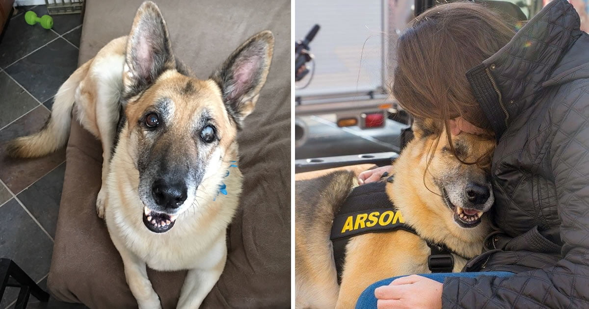 Terminally Ill Rescue Dog Completes Her Borket List After Traumatic Life