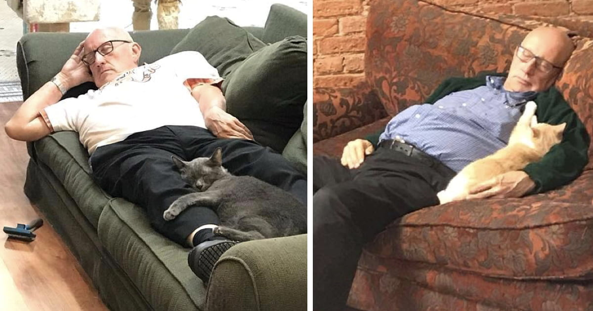 75-Year-Old Man Volunteers And Naps With Cats At Animal Shelter Every Day